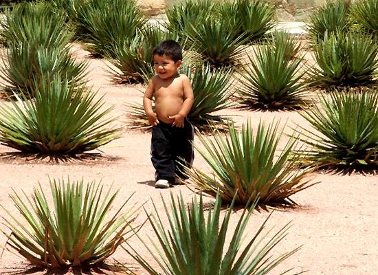 Kid and cactuses