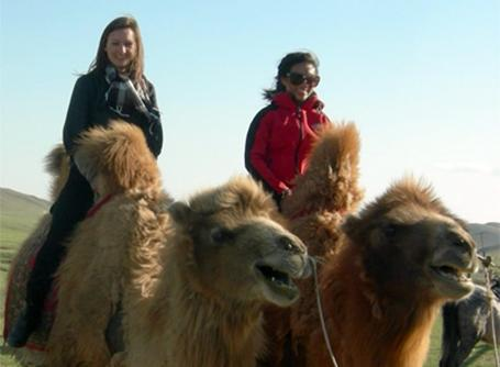 Des volontaires sur des chameaux en Mongolie