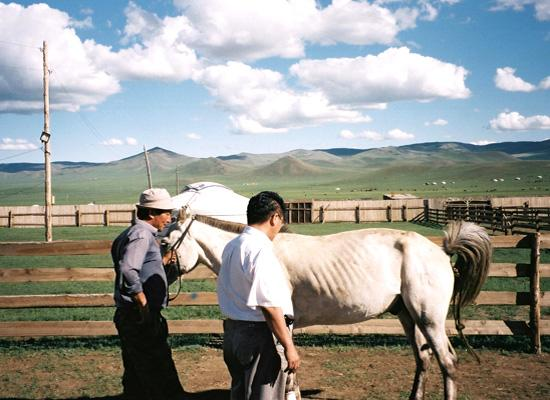 Locals with horse