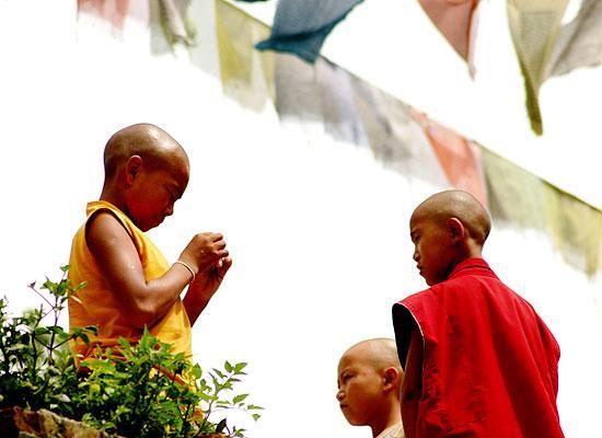 Monks monkey tempele