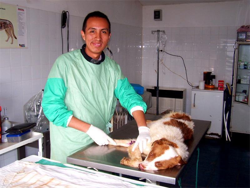 Stage en médecine vétérinaire en Roumanie