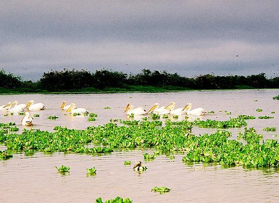 Plant life on a lake