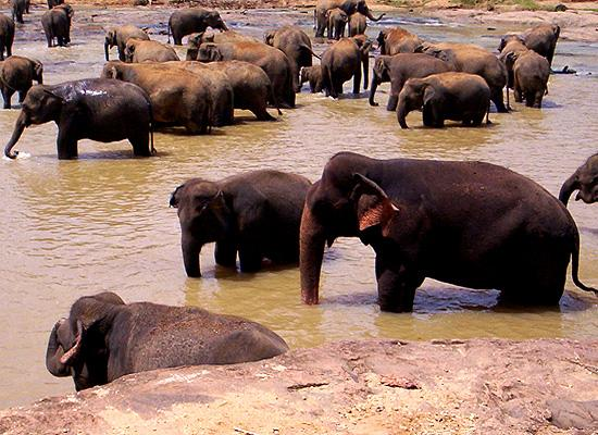Elephants in reservation