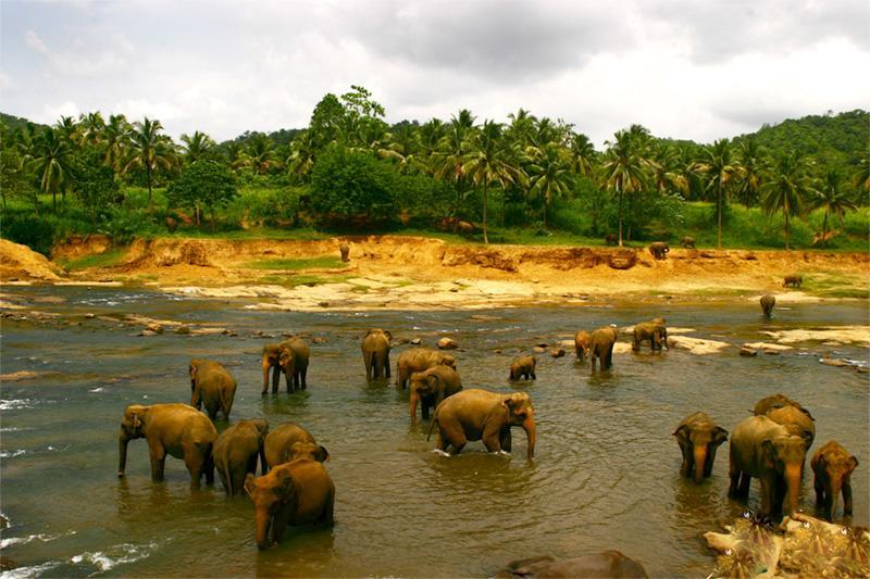 Orphelinat d'éléphants au Sri Lanka