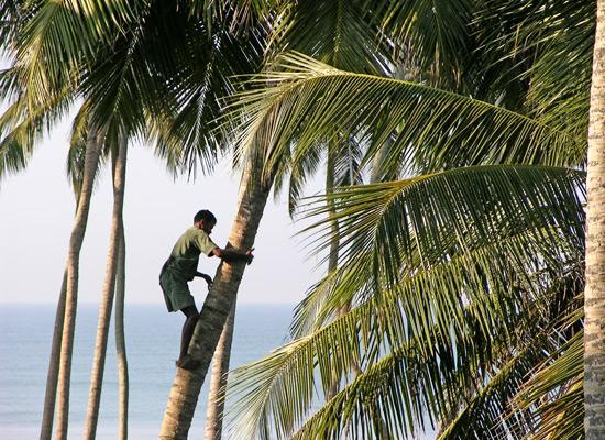 Palm clean