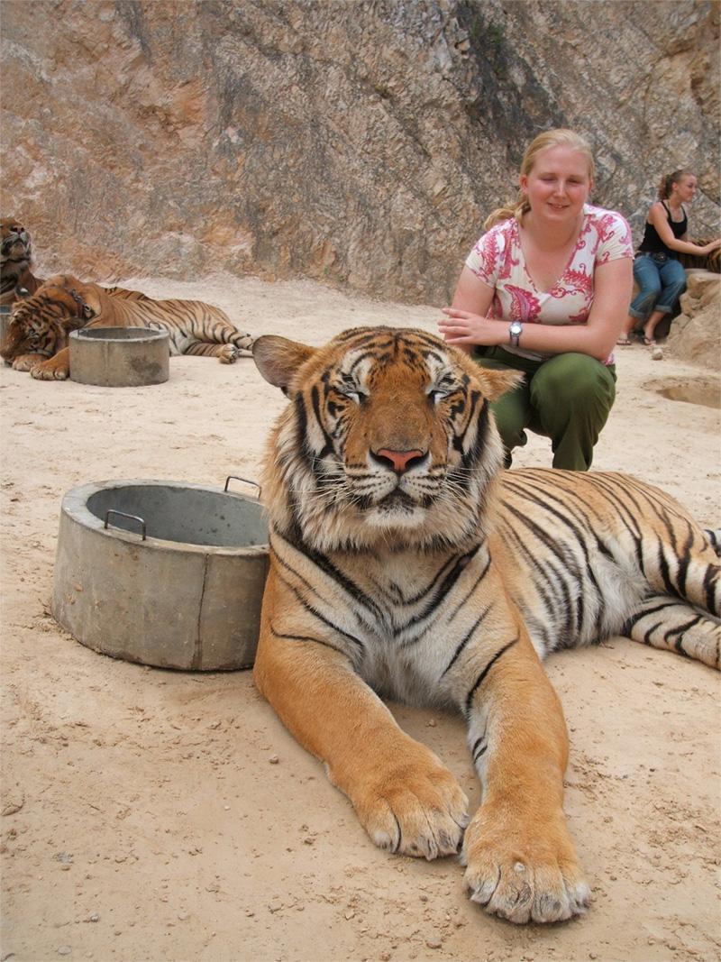Volontaire avec un tigre en Thaïlande