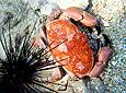 Crab Freedom