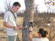 Volontariat protection des arbres