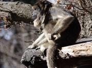 Mission Réhabilitation des primates