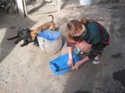 Stagiaire en Médecine Vétérinaire