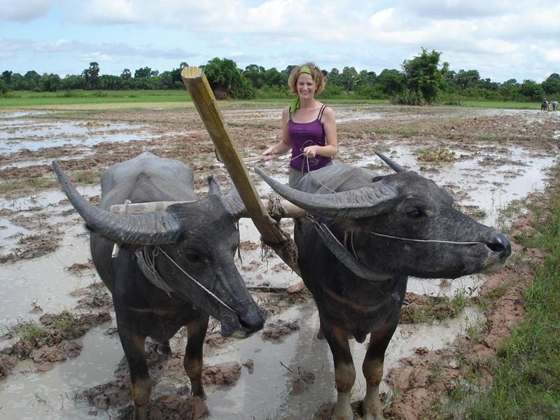 Travail labourage des terres
