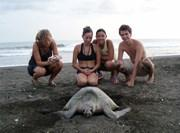 Travail observation des tortues