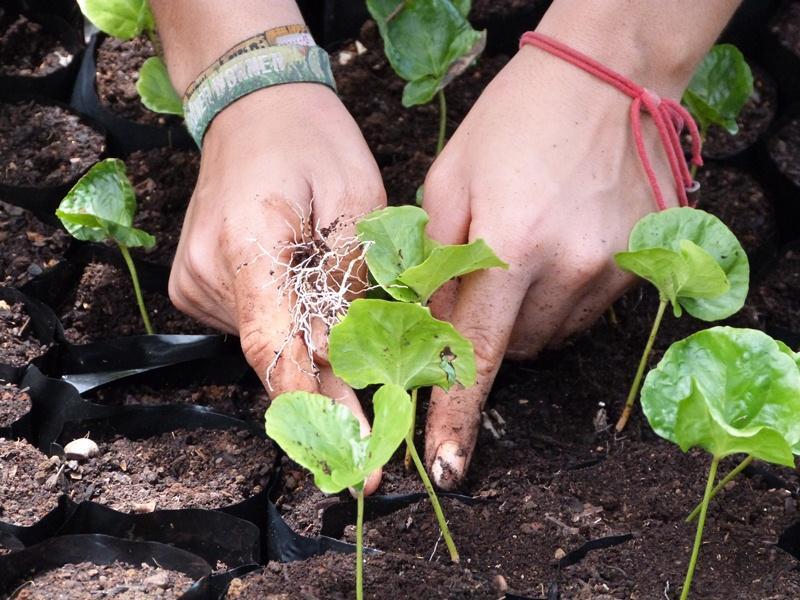 Activité de plantation en écovolontariat