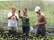 Projet de lutte contre les plantes invasives