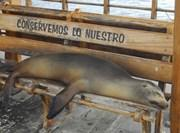 Projet de recherche sur les lions de mer