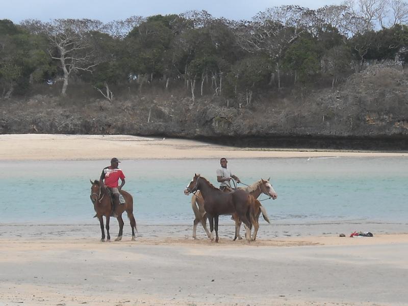 Activité randonnée à cheval