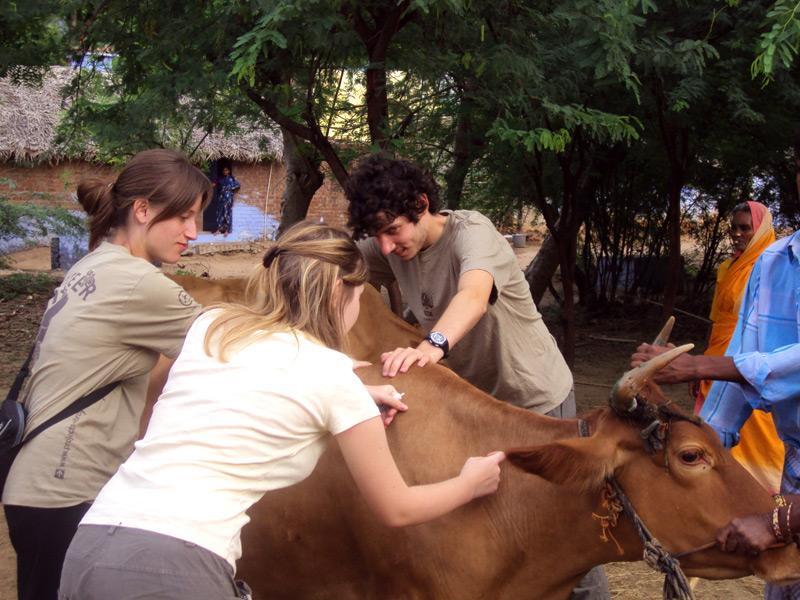 Bénévole médecine vétérinaire en action