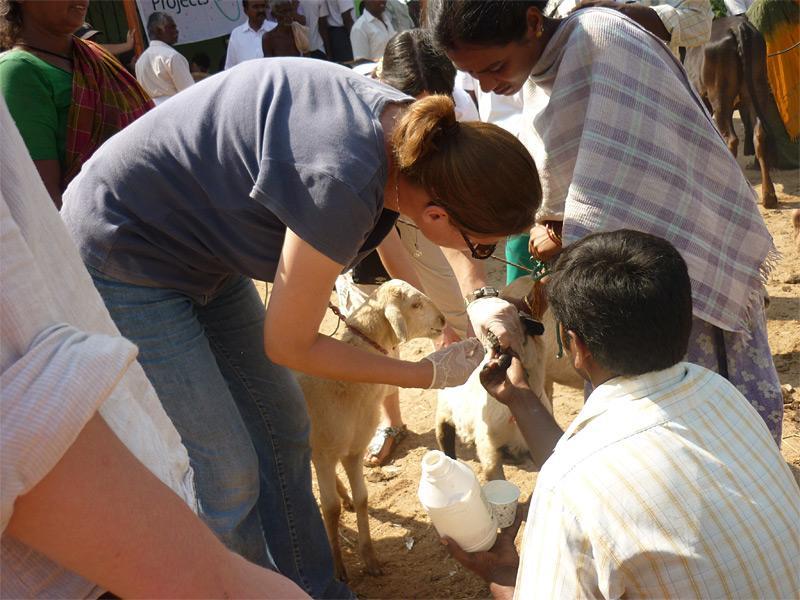 Mission médecine vétérinaire