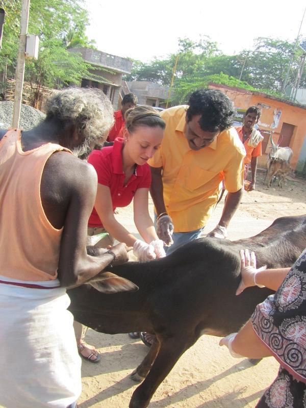 Stagiaire médecine vétérinaire