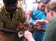 Bénévole médecine vétérinaire sur le terrain