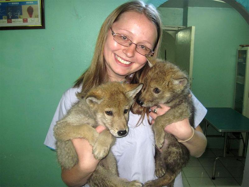 Action soins des animaux