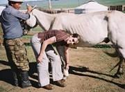 Activité soins des chevaux