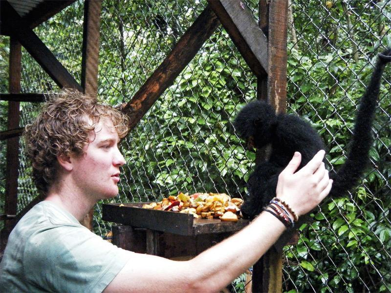 Activité réintroduction des singes-araignées