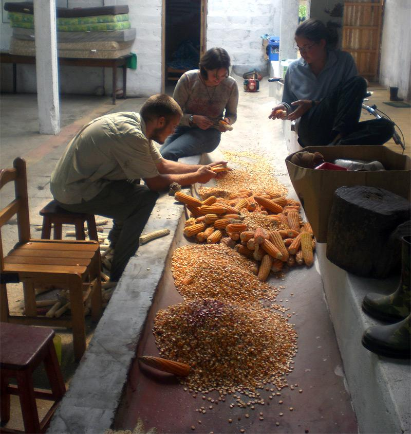 Immersion culturelle et travail communautaire
