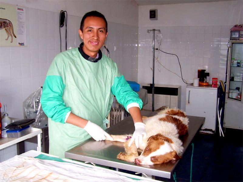 Stage médecine vétérinaire