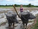 Khmer Project: agricultural village