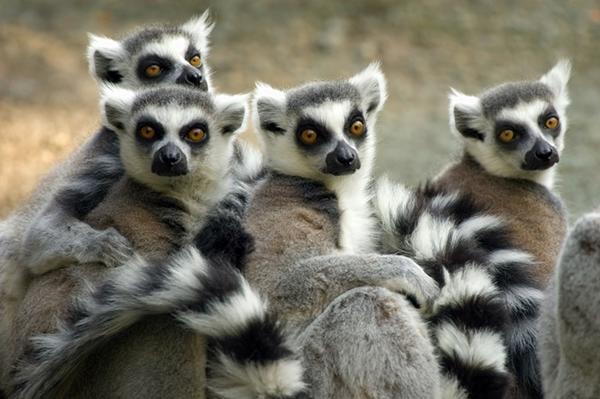 Tutela della foresta pluviale in Madagascar