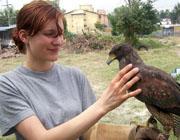 Volontariato Animali