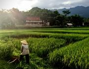 Le risaie di Mai Chau