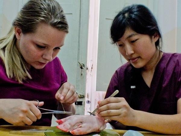アルゼンチンの医療プロジェクトで縫合の練習をする医療インターン
