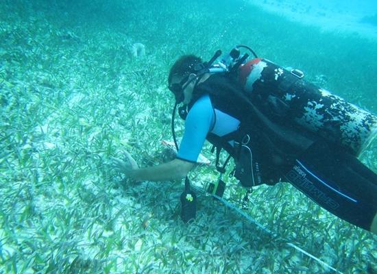 環境保護ボランティアがベリーズで調査ダイビングをしている様子