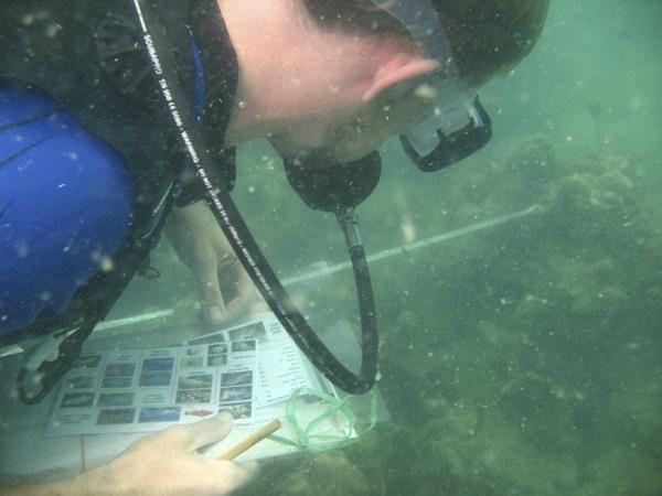 カンボジアの海洋保護プロジェクトで海中の生態調査を行うプロジェクトアブロードのボランティア