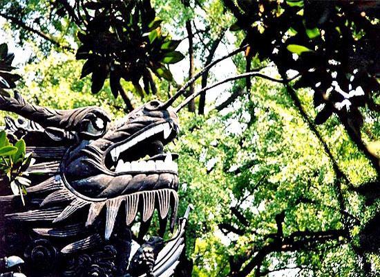 Dragon forbidden city