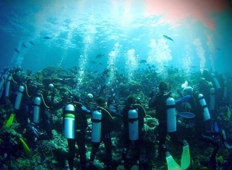 環境保護プロジェクトでサメの生態調査を行うプロジェクトアブロードの海洋保護ボランティアたち
