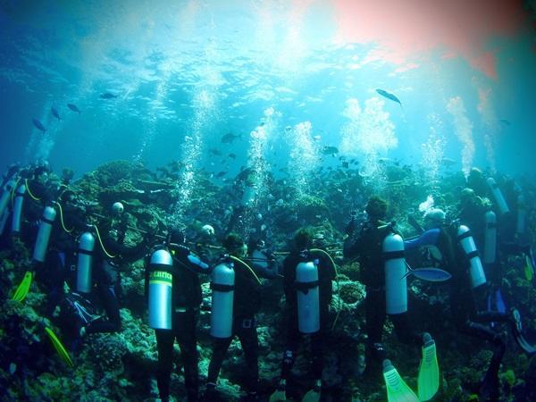 フィジーのサメ生態保護プロジェクトで海中の生態調査を行うボランティアたち