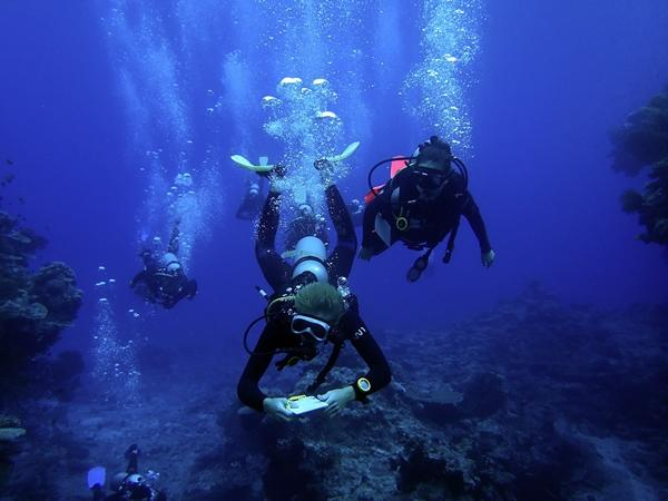 Volunteers doing underwater research at the shark conservation project in Fiji, Australasia