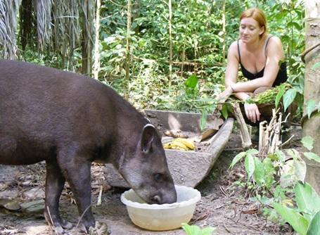 ペルーの環境保護プロジェクトで保護した動物にエサを与えるプロジェクトアブロードのボランティア