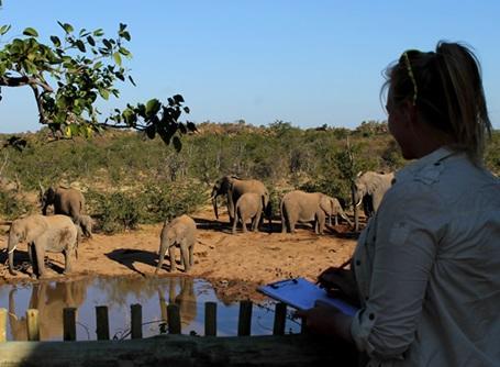ボツワナの環境保護プロジェクトでゾウを観察するプロジェクトアブロードのボランティア