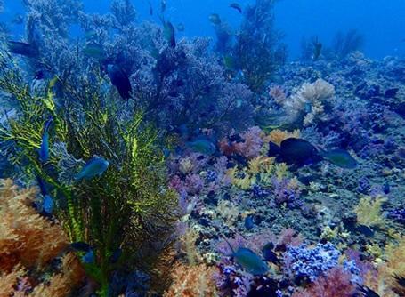 美しい海で見られるタイの海洋生物