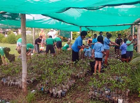 피지에서 야생식물 보호와 망그로브를 수집하고 있는 프로젝트어브로드 봉사자들