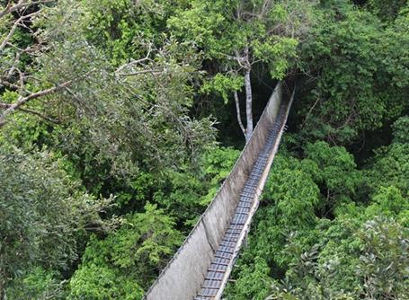 타리카야 생태 보호 구역의 캐노피 워크