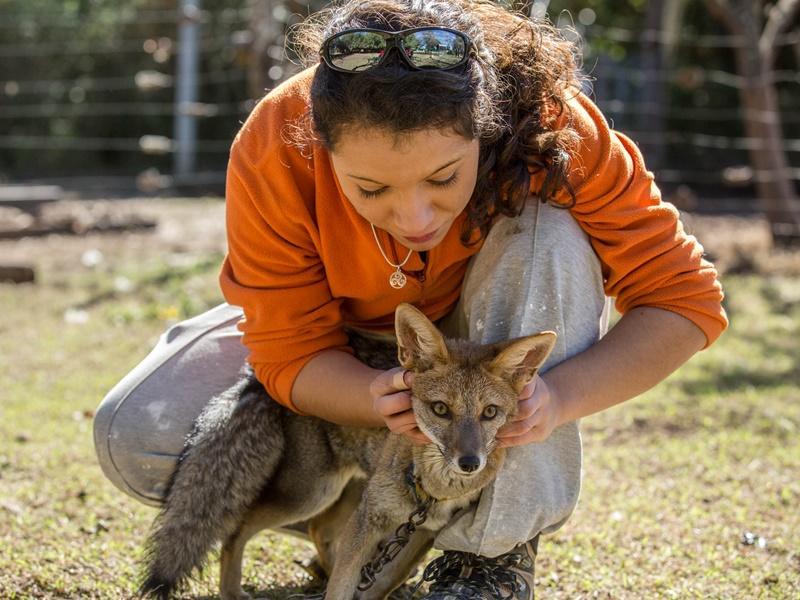 Deze vos wordt al twee jaar verzorgd in de Pumakawa dierenkliniek in Argentinië