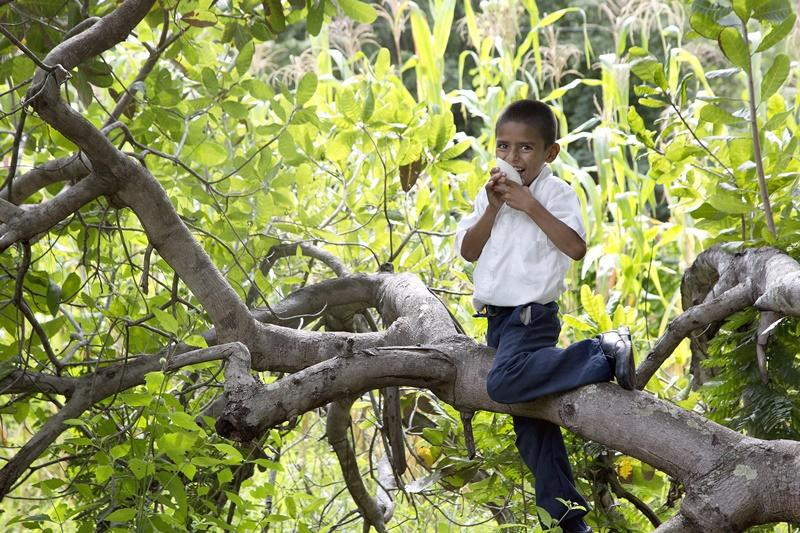 Een spelend kind in een boom
