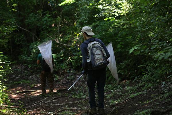 Vrijwilligers op het natuurbehoud project zoeken naar vlinders voor het vlinderonderzoek in Barra Honda National Park