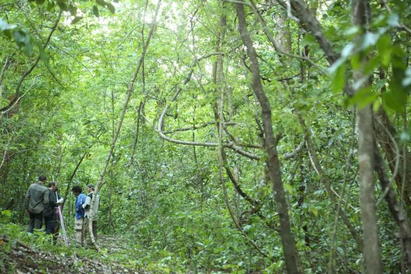 Vrijwilligers op het natuurbehoud project zetten mistnetten op om vleermuizen te vangen voor het vleermuis onderzoek in Barra Honda