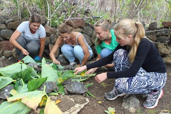 Vrijwilligers geven schildpadden te eten op het natuurbehoud project in Ecuador